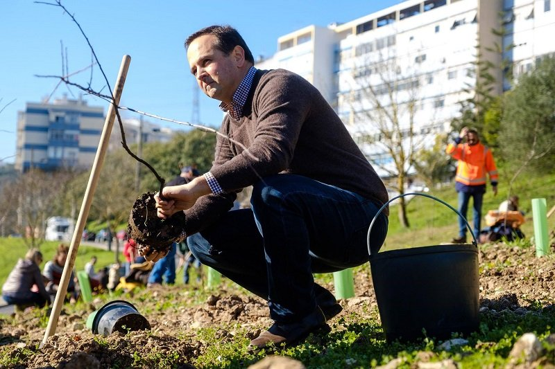 fernando medina a plantar árvores em lisboa