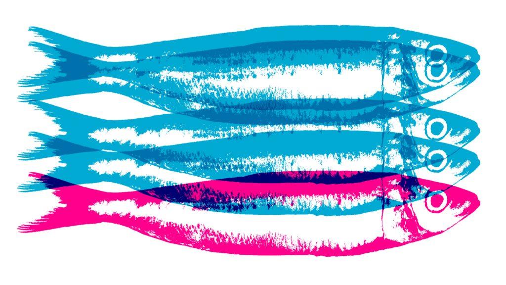 cartaz 10º concurso sardinha festas de lisboa