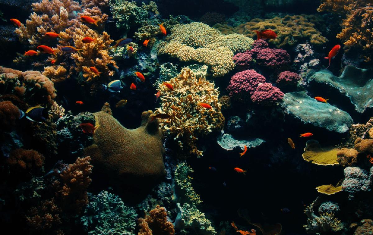 corais no aquário do oceanário de lisboa