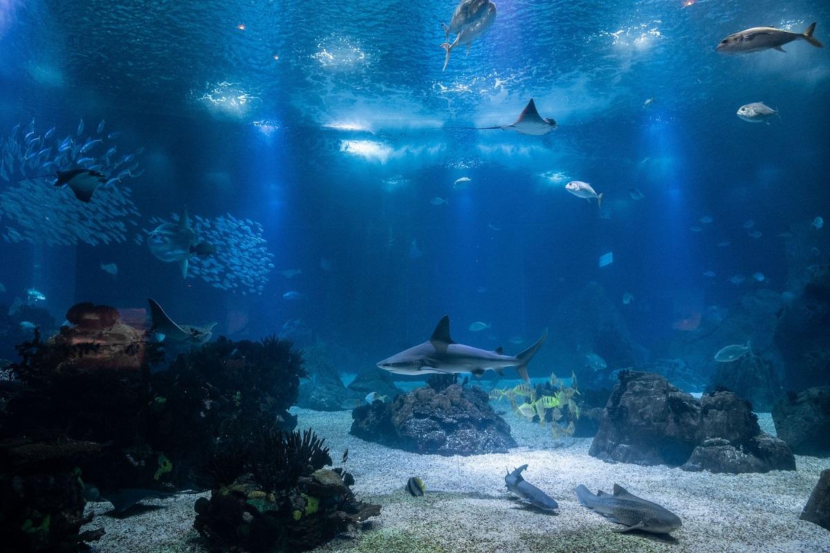 aquário central do oceanário de lisboa