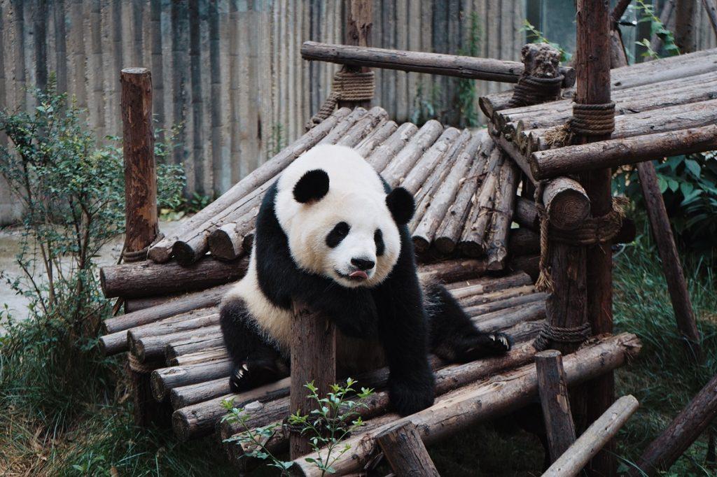 8 jardins zoológicos para visitar online