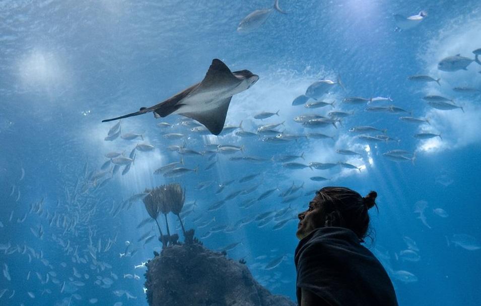 mulher no oceanário de lisboa
