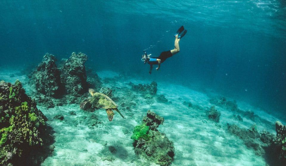 Oceanário de Lisboa comemora Dia Mundial da Terra com mais de 100 atividades ligadas ao oceano