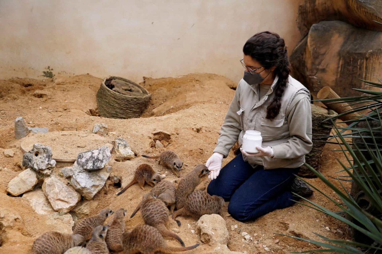 tratadores cuidam dos animais no Jardim Zoológico de Lisboa
