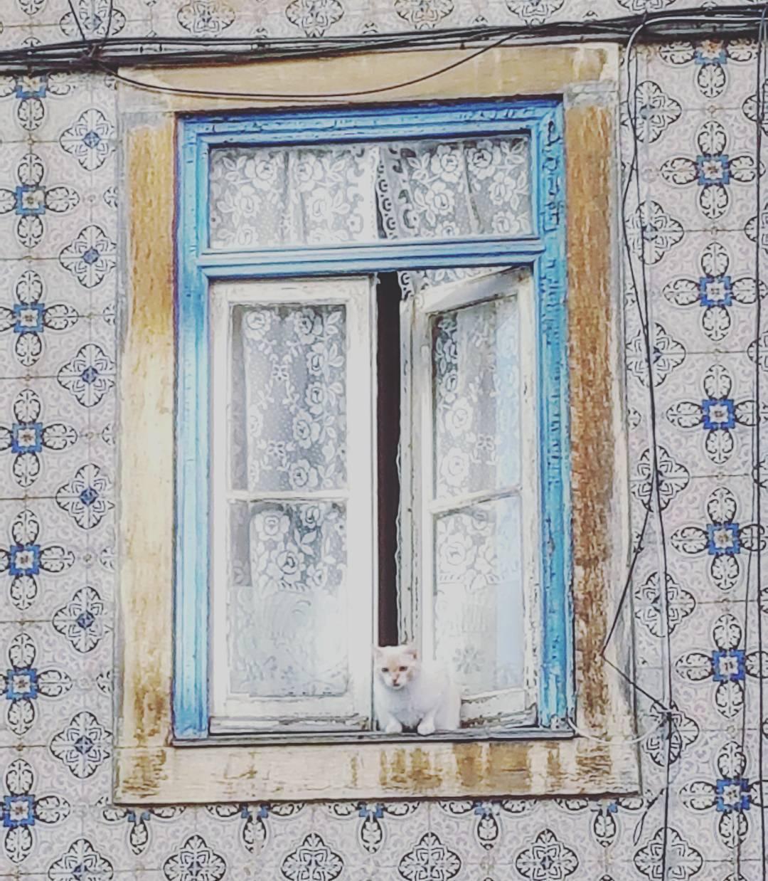 30 fotografias das janelas mais bonitas de Lisboa30 fotografias das janelas mais bonitas de Lisboa
