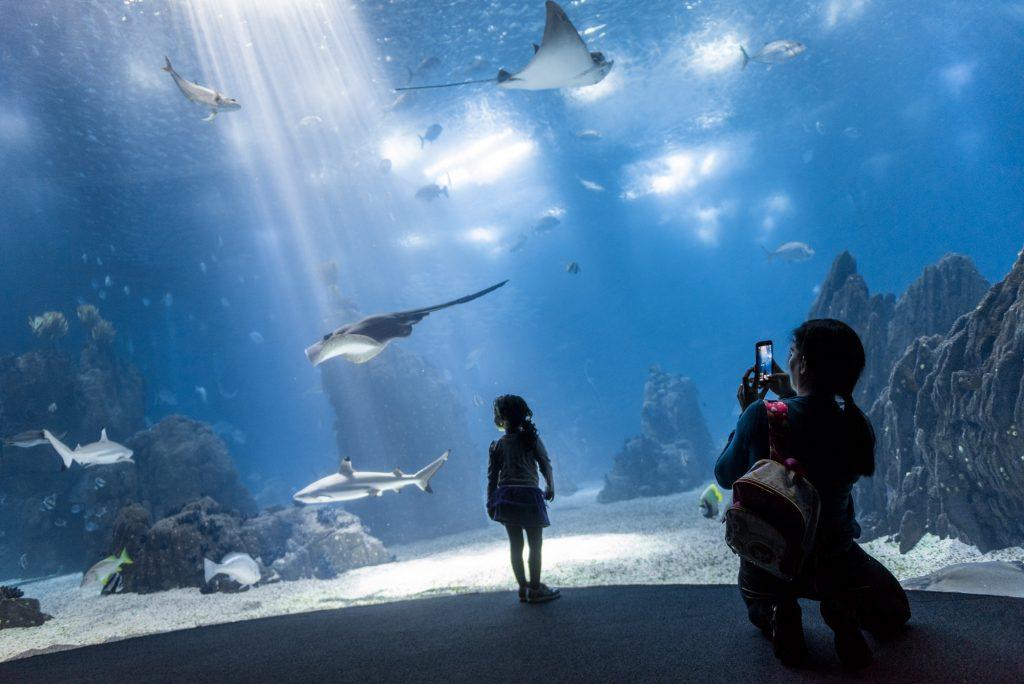mãe tira fotografia a criança no oceanário de lisboa