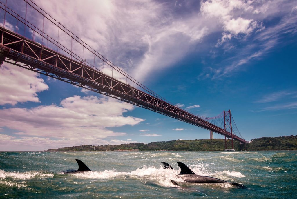 Golfinhos passeiam pelo Tejo há vários dias