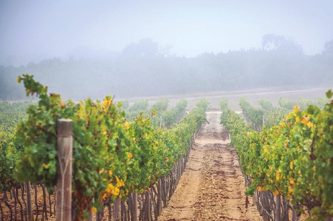 vinha dos vinhos vicentino
