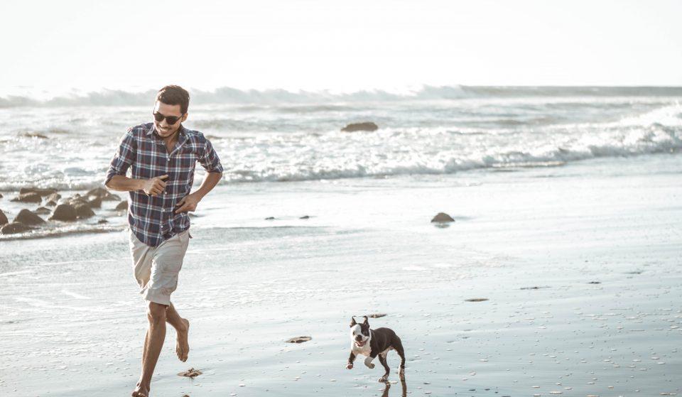 O teu cão adora praia? Estas são 6 praias dog friendly em Portugal