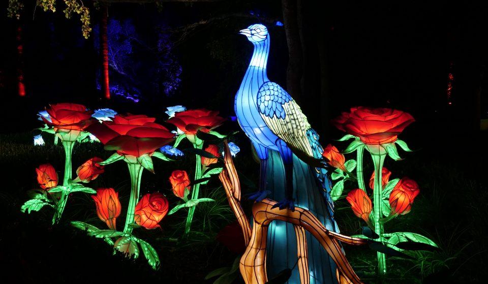 Jardim Botânico Tropical enche-se de luz e cor para uma experiência sensorial interativa