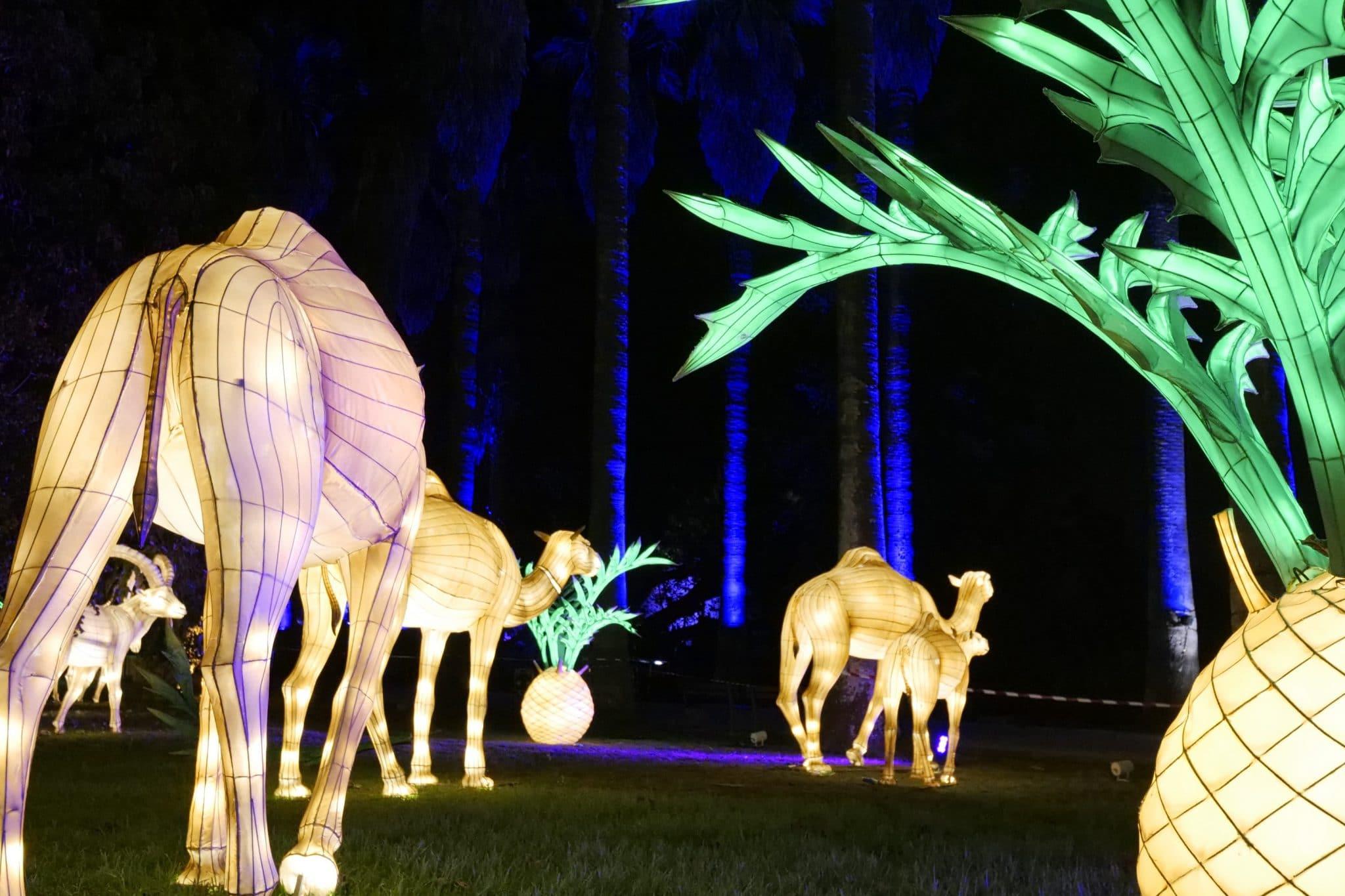 Jardim Botânico Tropical enche-se de luz e cor para uma experiência  sensorial interativa - Lisboa Secreta
