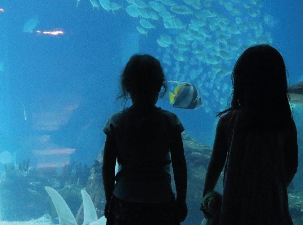 O Oceanário de Lisboa é para visitar em família… e a preços especiais