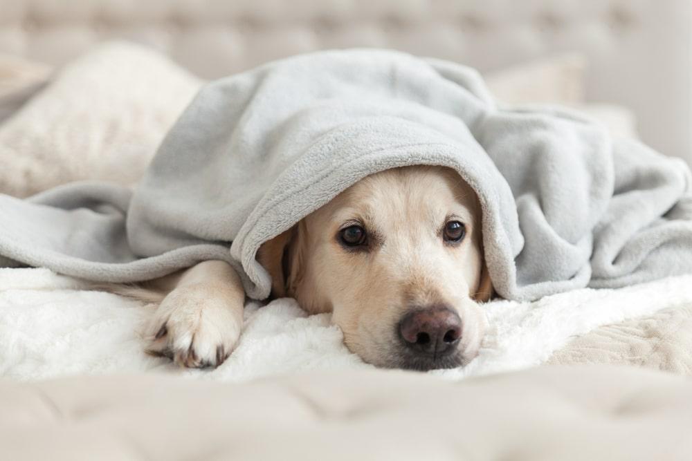fotografia de cão