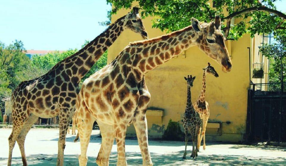 Jardim Zoológico de Lisboa tem descontos nos bilhetes até ao fim do mês