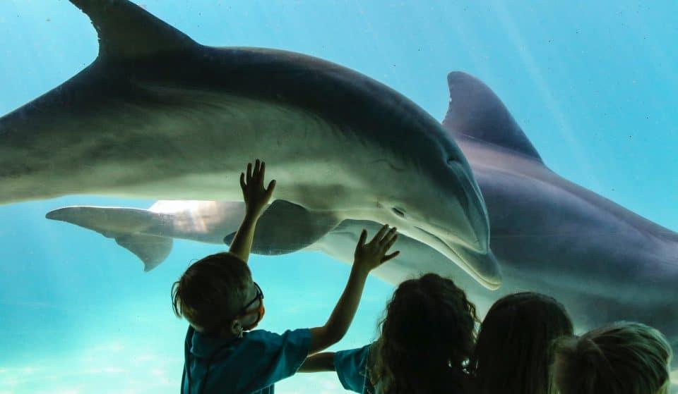10 planos para um Dia da Criança espetacular