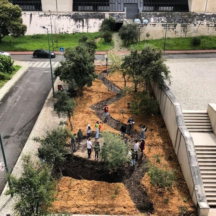 """Lisboa tem uma nova mini-floresta com """"hotéis"""" para insetos e répteis"""