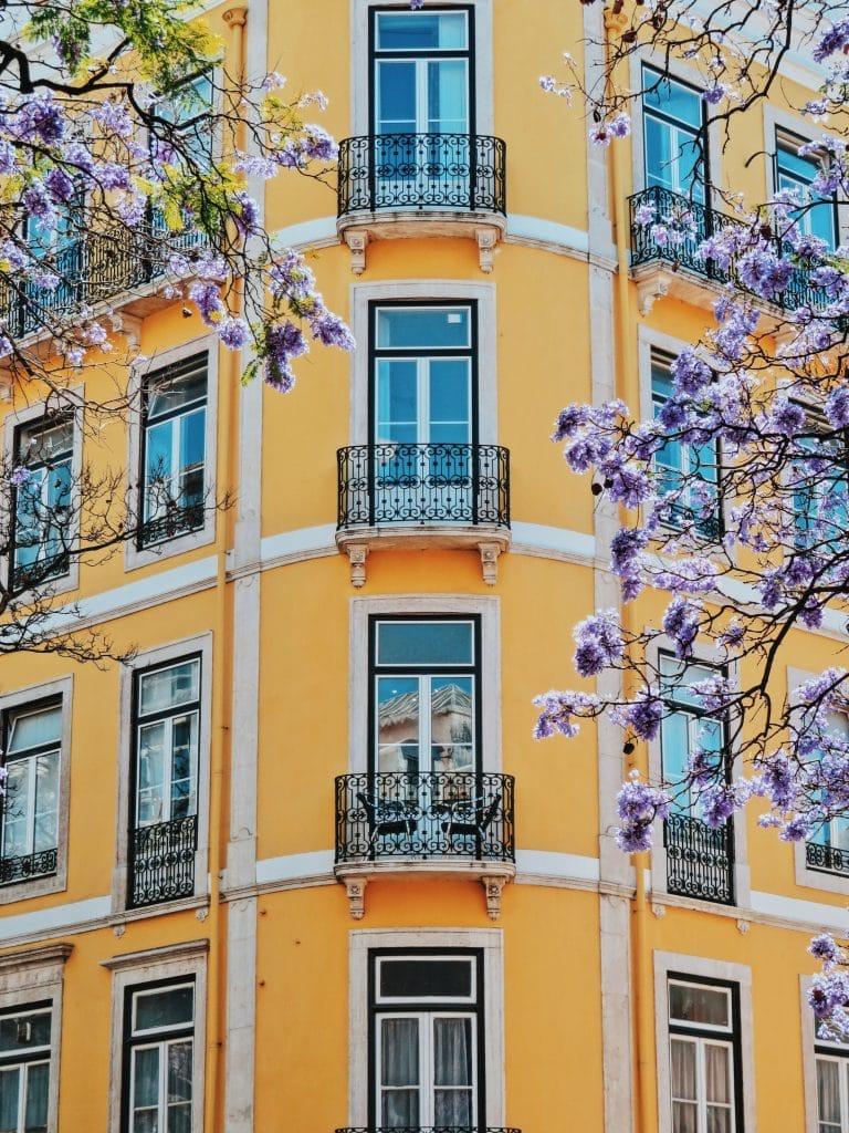 10 fotografias de jacarandás em Lisboa que vais adorar