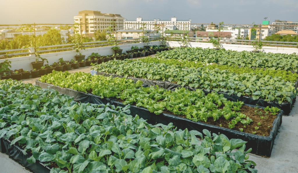 Une ferme urbaine de 3000 m2 bientôt sur les toits de Gerland !
