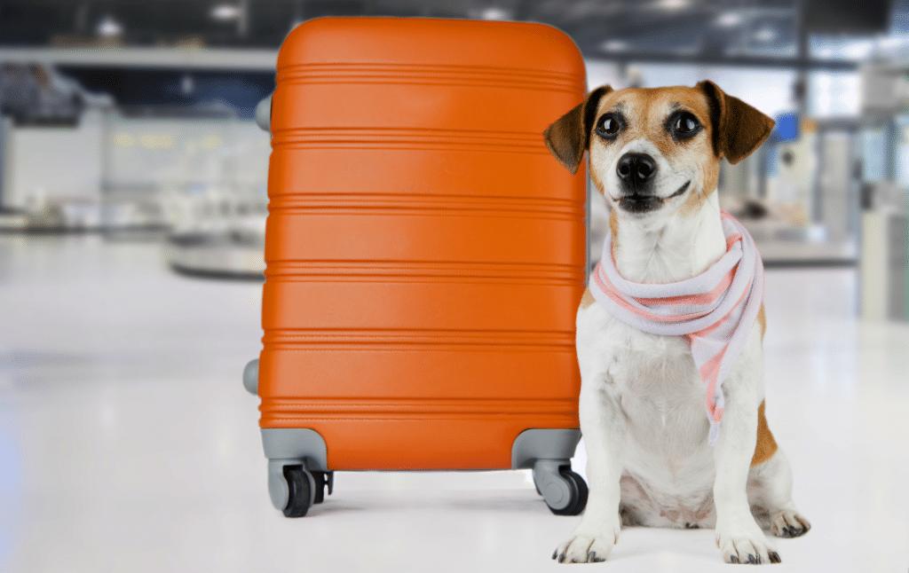 C'est officiel : les chiens bientôt autorisés dans le métro de Lyon !