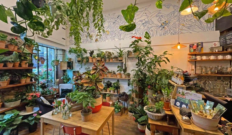 Un Brin de Folie : le café-jardin extraordinaire qui rafraîchit la Presqu'île !