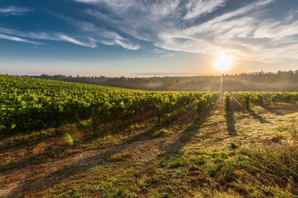 Où voir et photographier les plus belles vignes près de Lyon ?