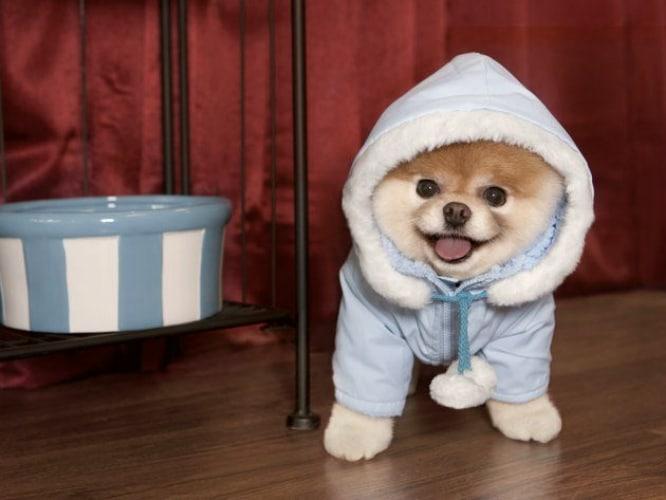 modas raras perros