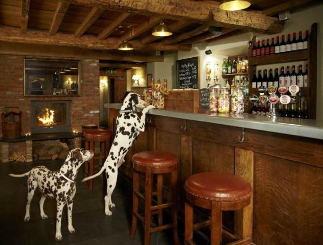 8 bares y restaurantes para ir con tu mascota en Madrid y decir «¡guau!»