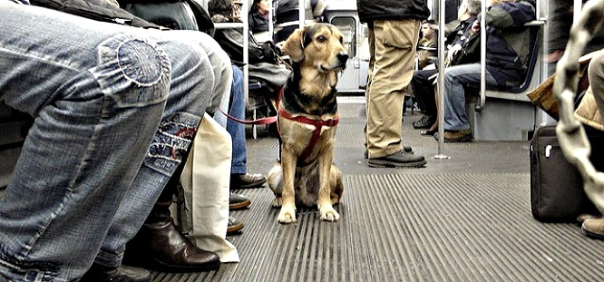 ¡Nuestros amigos de cuatro patas ya pueden viajar en metro!