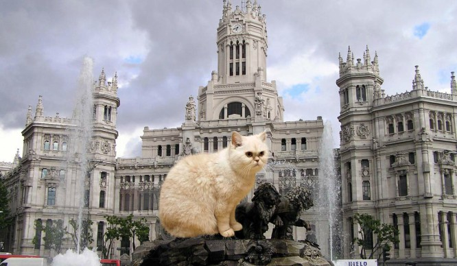 ¿Por qué a los madrileños se les llama gatos?