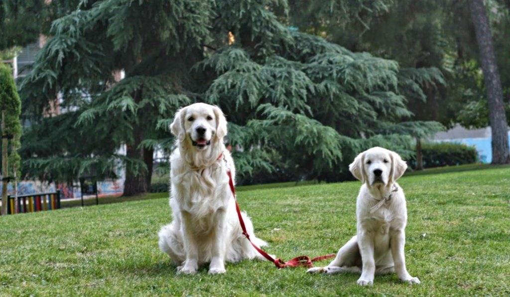 Los madrileños tendrán que pedir permiso al Ayuntamiento para tener más de 5 mascotas
