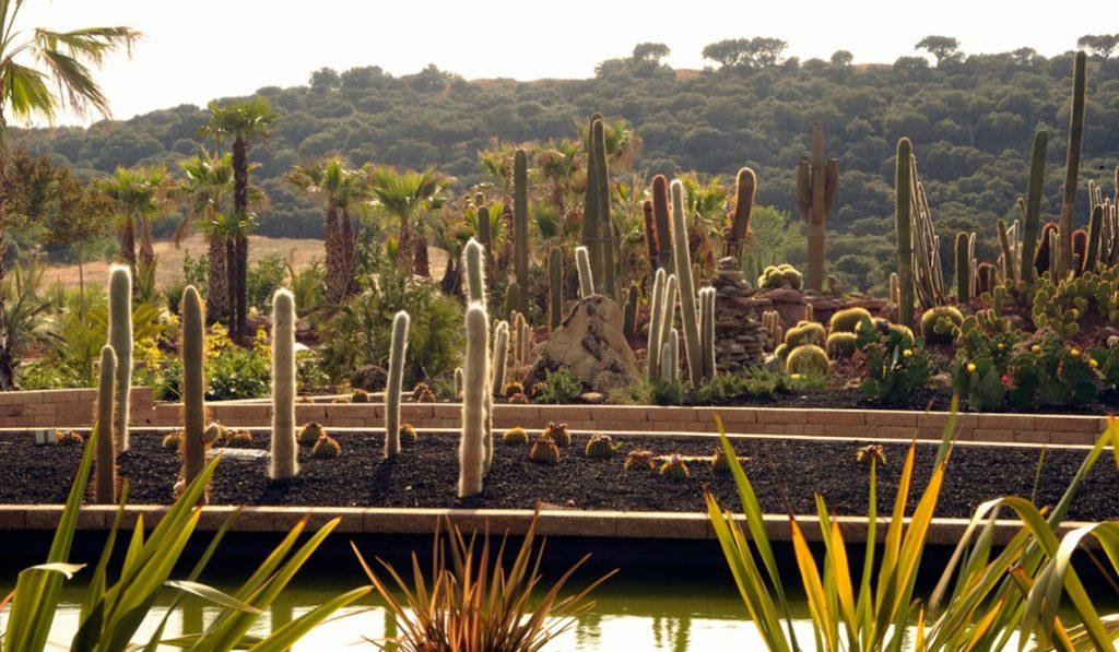 Un desierto plagado de cactus a las afueras de Madrid