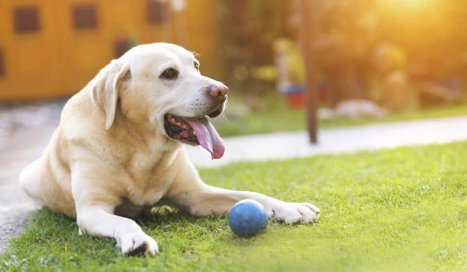 Parques para que nuestros perros disfruten como cachorros