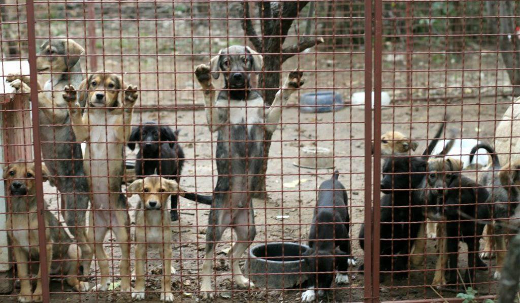 La ley que prohíbe el sacrificio animal colapsa la perrera municipal