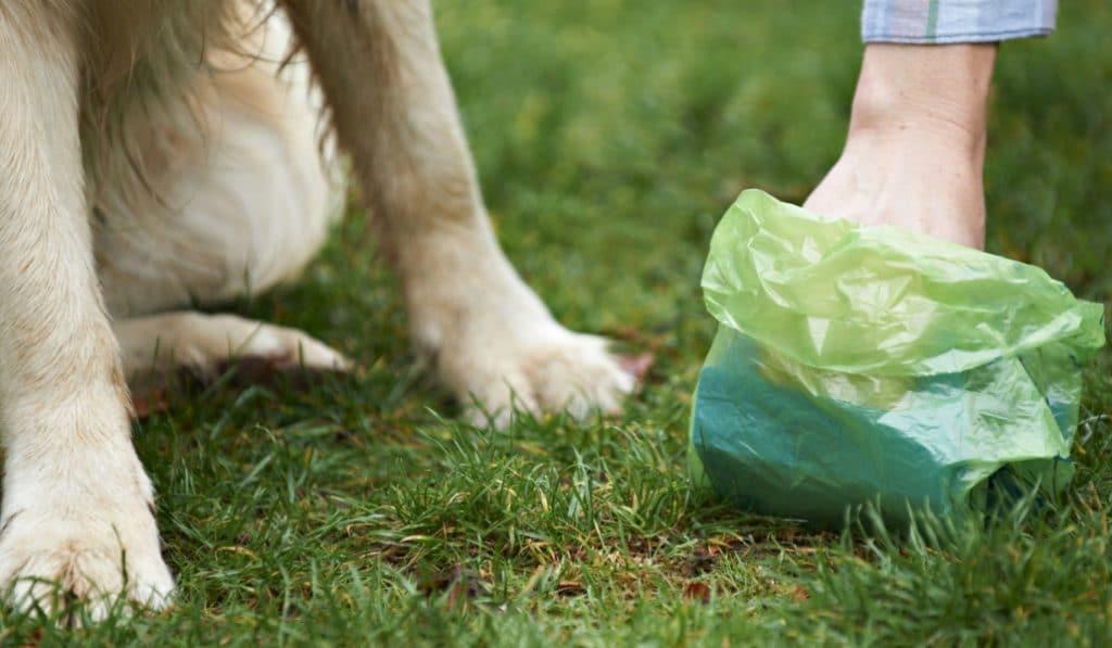 El Ayuntamiento lanza una app para localizar las bolsas para cacas de perro
