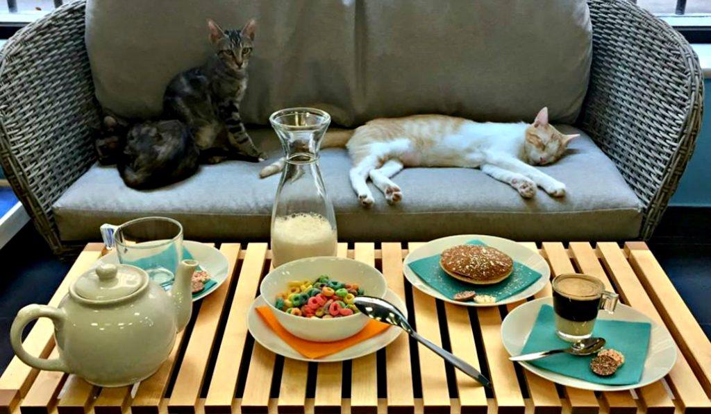 Madrid ya tiene otro «café de gatos» en pleno centro