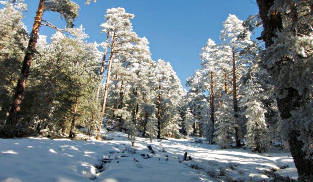 10 postales que ha dejado la nieve en la sierra de Madrid