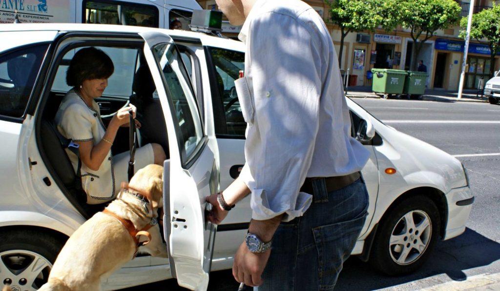 'Mascotaxis', el único servicio de taxis de Madrid que transporta mascotas