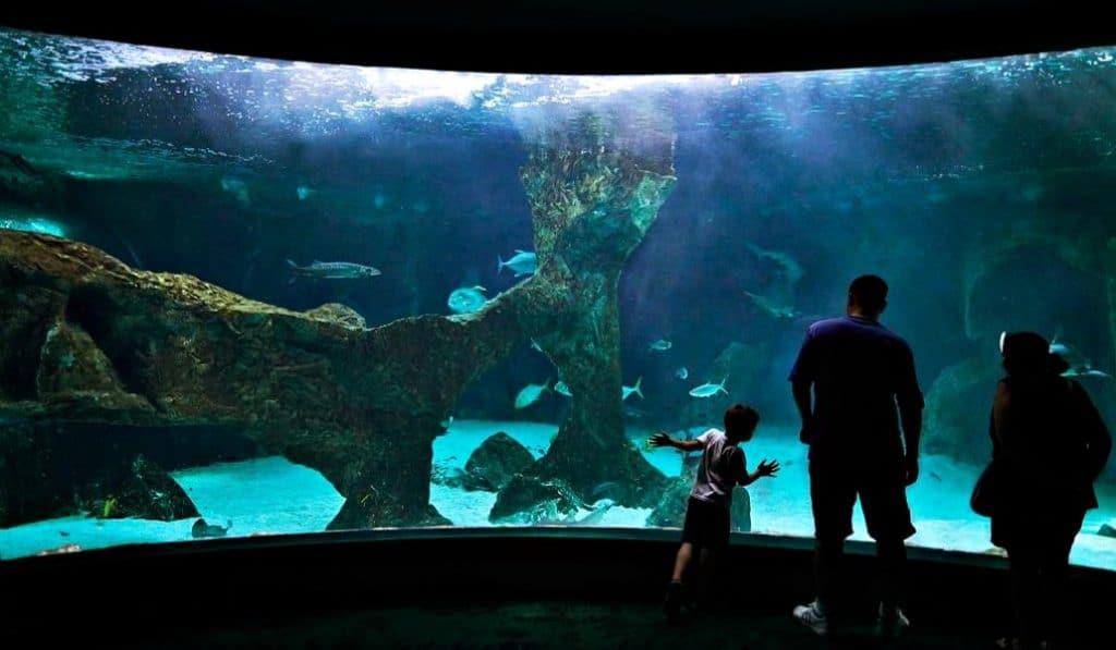 Madrid tendrá un acuario con pingüinos y tiburones en otoño