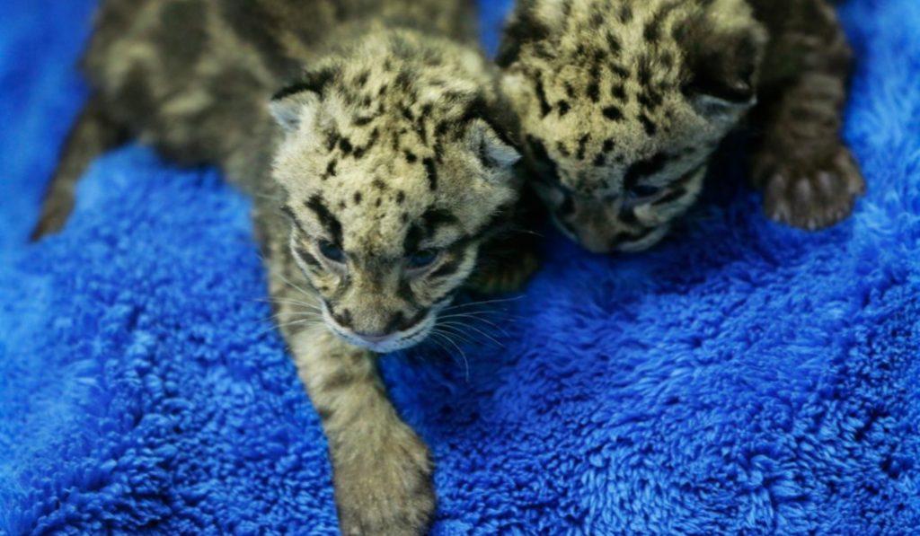 El Zoo Aquarium de Madrid tiene nuevos huéspedes
