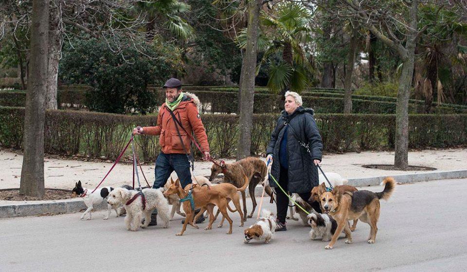 El número de mascotas adoptadas en Madrid aumenta un 30%