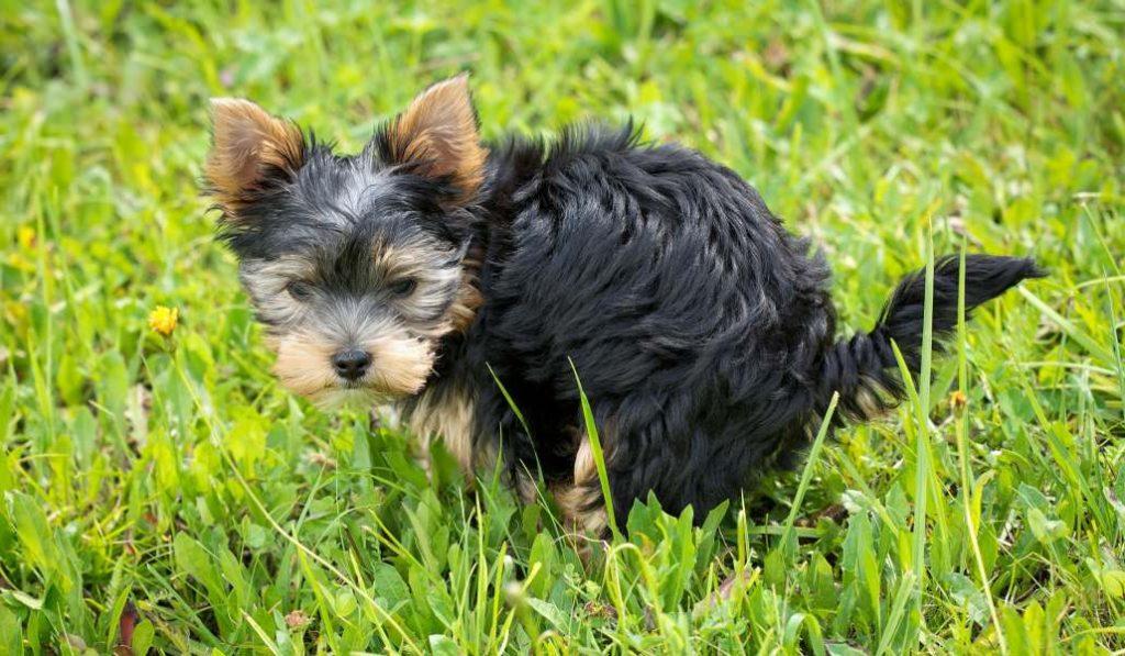 Fuenlabrada te multará con 1.200 euros si no recoges la caca de tu perro