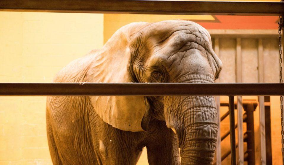 Madrid prohibirá los circos con animales salvajes en marzo