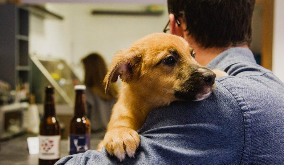 El primer café con cachorros en adopción abre en Madrid