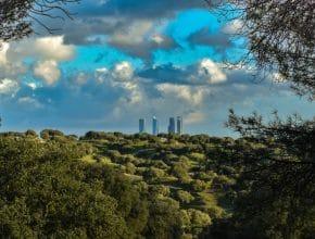 Baños de bosque: qué son y dónde tomarlos en Madrid