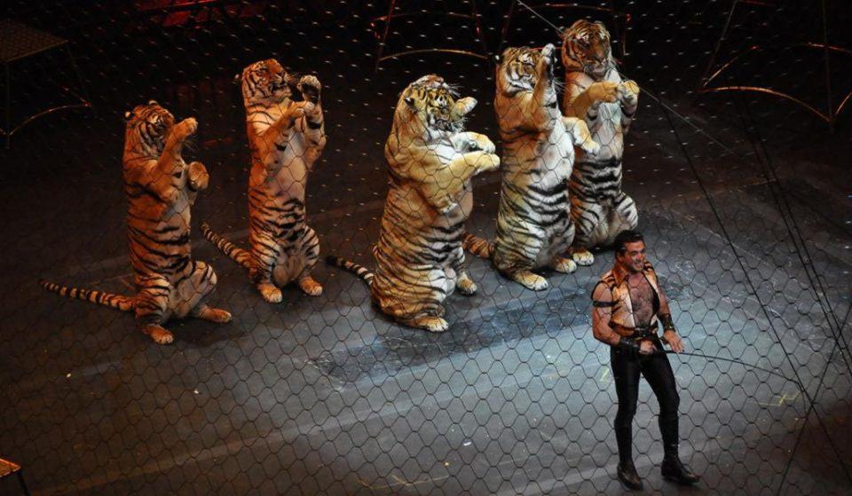 Los circos con animales de Madrid se manifiestan contra su prohibición