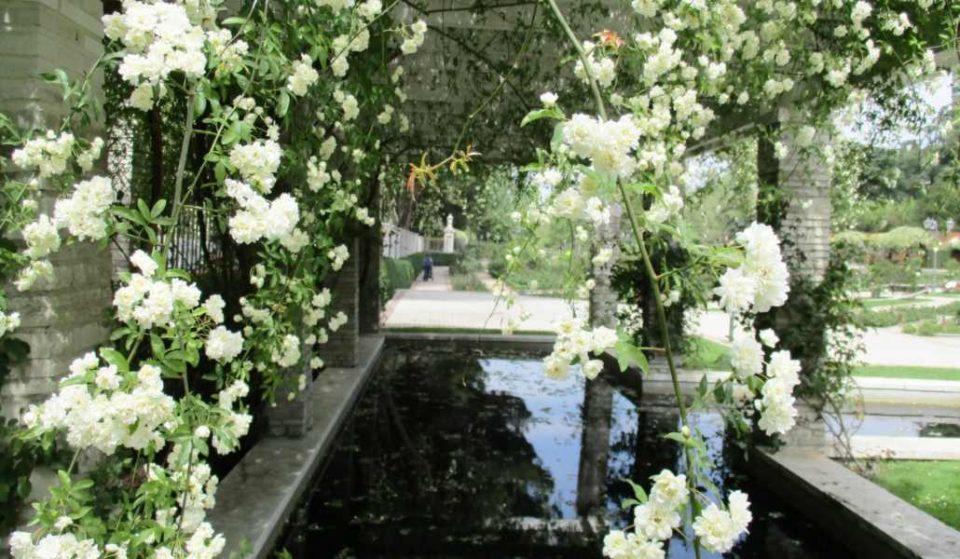 La Rosaleda del Parque del Oeste florece por primera y última vez este año