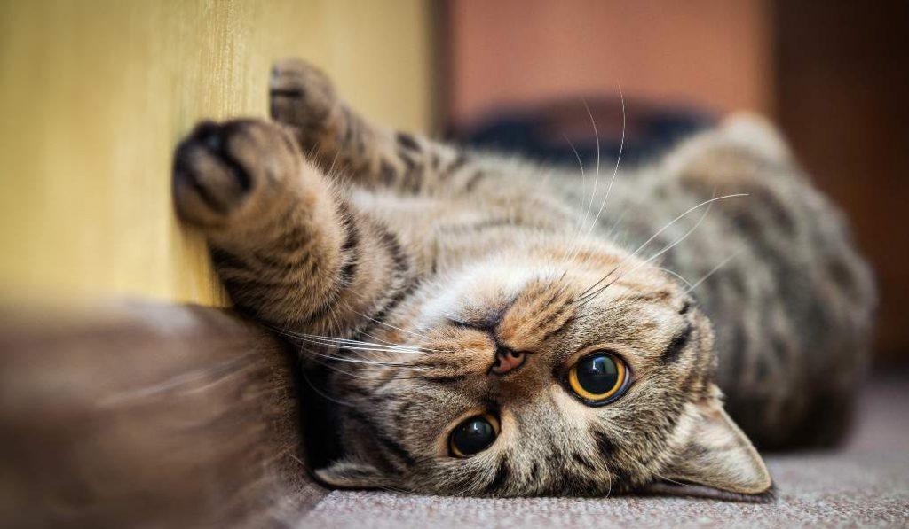 Arroyomolinos instala casetas para dar cobijo a los gatos callejeros