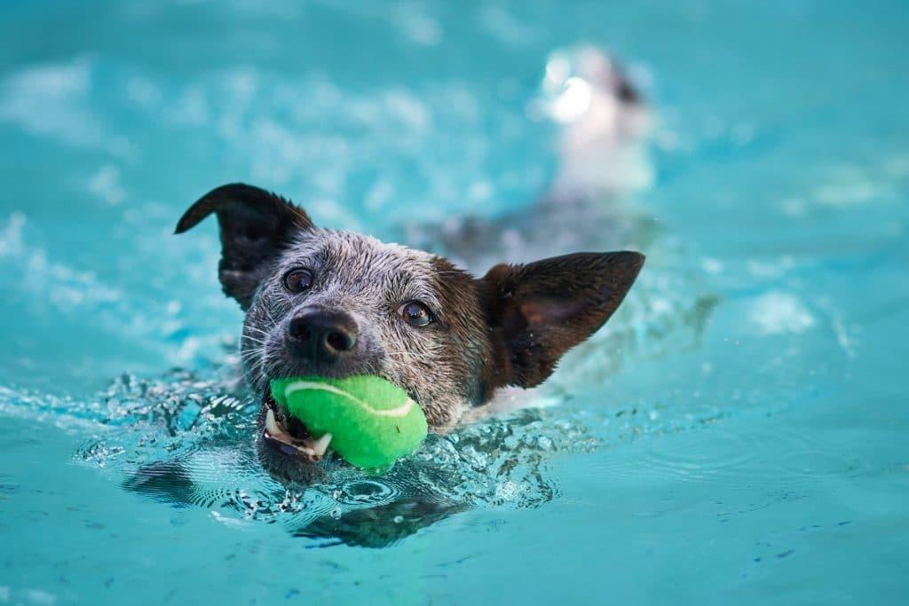 Tu perro podrá entrar y bañarse en esta piscina el próximo domingo