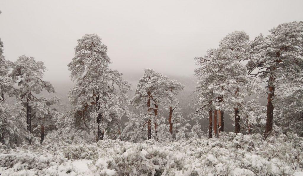 Ya empieza a nevar en Navacerrada