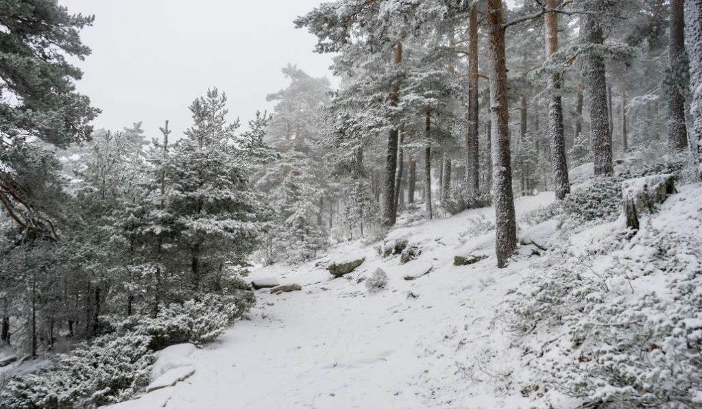 La primera nevada invernal cae sobre Navacerrada